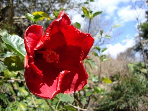 Flower in Malinalco