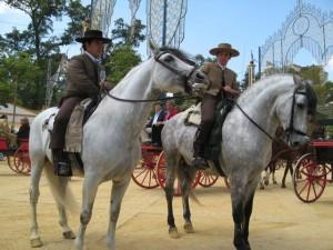 Horses in Jerez de la Frontera, Spain