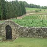 Albet i Noya Organic Vineyard