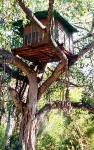tree, house, hostel, travel, hotel, Turkey, Olympos, beach, mountains, Europe, Asia
