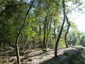 Parc de Collserola Fauna