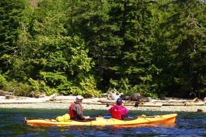 A black bear and her two cubs spotted while kayaking.