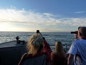New Quay dolphin spotting