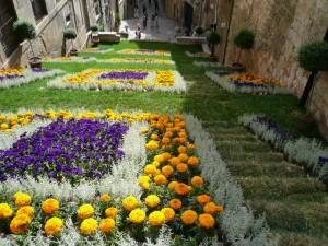 Blossoms blanket the city - Temps de Flors