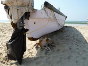 Patnem Beach, India