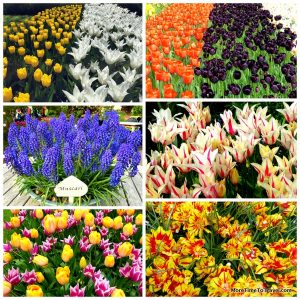 Some of the magnificent flower displays at Keukenhof Gardens