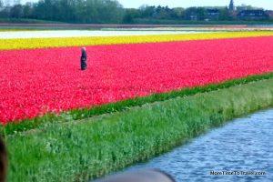 A flower field in the area surrounding the Keukenhof Gardens