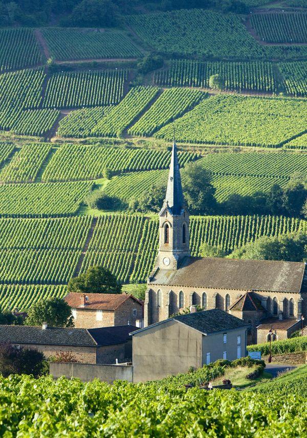 Macon-Burgundy-wines