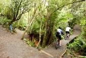 Tongariro_River_Trail