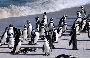 https://www.travelhoppers.com/wp-content/uploads/2018/04/Boulders-Penguins-2.jpg