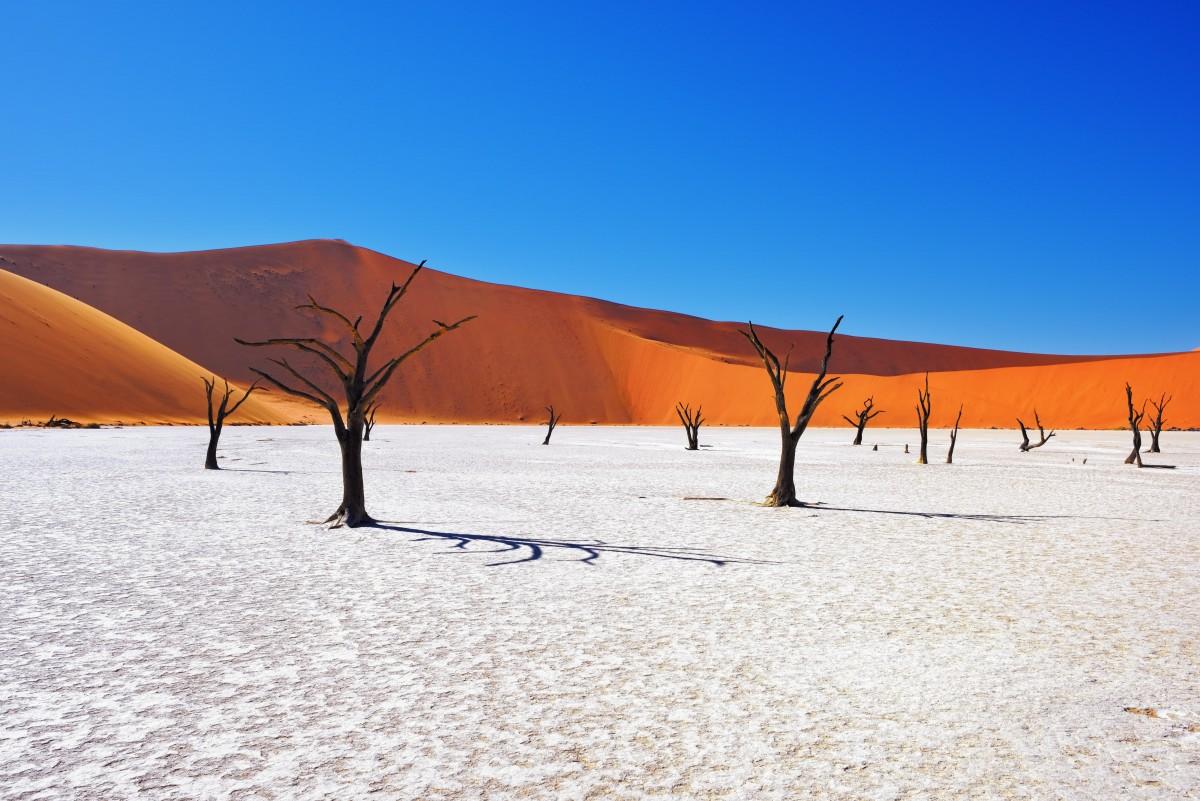 Camelthorn Trees Sossusvlei